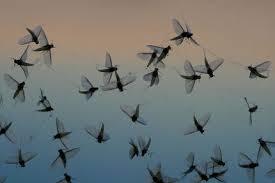 Mücken2