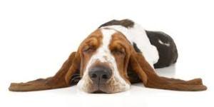 Hund schlafend