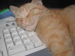 Katze auf PC schlafend