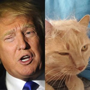 trump-your-cat3